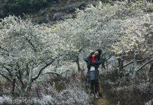 Các điểm du lịch Mộc Châu không nên bỏ qua